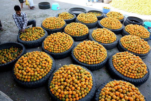 Un vanzator de portocale sorteaza fructele, intr-un depozit din Bhopal, India, odata cu inceputul sezonului la cules de citrice. Foto: EPA/SANJEEV GUPTA/AGERPRES