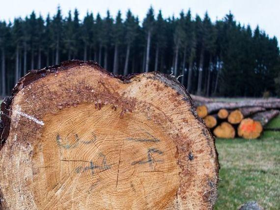 Ministerul Apelor si Padurilor anunta ca va supraveghea  foarte atent  activitatea grupului Schweighofer, dupa ce Asociatia pentru Certificare Forestiera a retras austriecilor certificarea