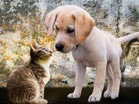 Taiwanul interzice consumul de carne de caine si de pisica