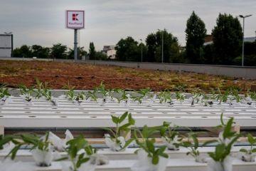 Kaufland deschide inca patru hipermarketuri, pana in februarie 2018. Retailerul investeste 300.000 euro pentru amenajarea de gradini urbane pe acoperisurile magazinelor