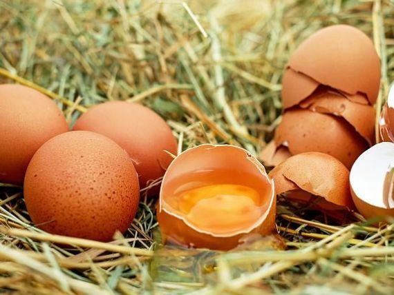 Reuniune la Bruxelles pe tema ouălor contaminate cu un insecticid interzis în UE. Douăsprezece ţări, inclusiv România, au fost afectate