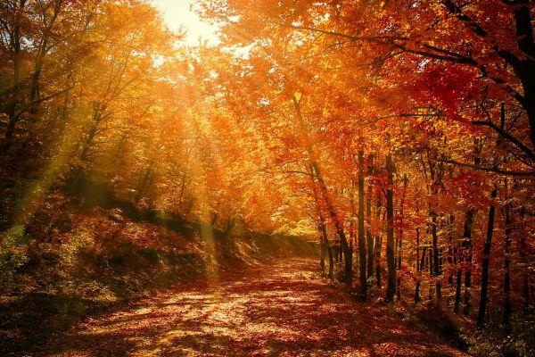 Vineri începe toamna astronomică. În noaptea de 22 septembrie are loc echinocţiul de toamnă, când Soarele trece din emisfera cerească nordică în cea sudică, iar noaptea este egală cu ziua. Valentin Sabau/www.pixabay.com