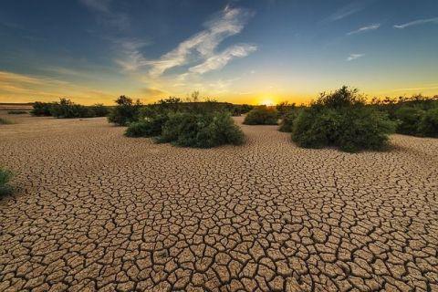 Culturile de grâu, porumb și sfeclă roşie se vor reduce la jumătate în Europa, până în 2050.  Schimbările climatice afectează deja continentul