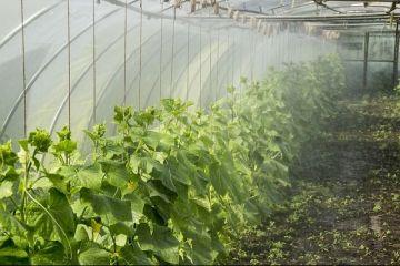 Administrațiile locale fac profit de pe urma fostelor sere lăsate în paragină. Cu cât vând legumele și florile