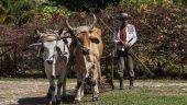 Cea mai mare reformă din Cuba comunistă nu impresionează. Fermierii, sceptici în privința proprietății private