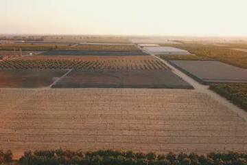 Hrană din piatră seacă. Exemplul Israelului, ţara din deșert care a devenit unul dintre cele mai dezvoltate state agrare din lume