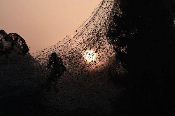 O pânză de păianjen de 1.000 de metri lungime acoperă vegetația în Xanthi, nordul Greciei. Vremea caldă și înmulțirea țănțarilor au contribuit la creșterea numprului de păianjeni Tetragnatha, care țes pânze gigant. AFP/Getty Images/Guliver