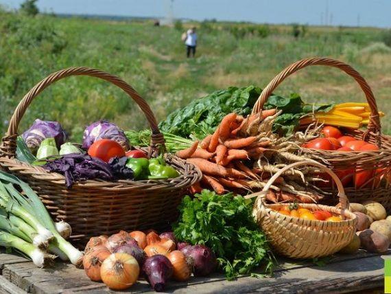 Cea mai mare fermă legumicolă bio din zona metropolitană a Bucureștiului a ajuns la 10 hectare