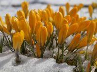 Temperaturi de primăvară în luna februarie. Când se întoarce iarna