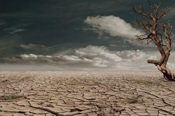 ONU: Rezervele de hrană ale planetei în  grav pericol . Omenirea a distrus specii întregi de animale și plante