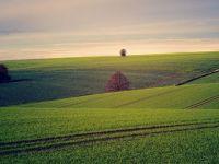 România ar putea hrăni 35 de milioane de oameni cu terenul pe care îl are, dar este doar la jumătate din capacitate în domeniul agriculturii