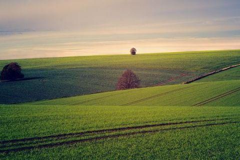Bloomberg: Familiile bogate din Germania cumpără pământul României. Trenurile arabile ieftine și fertile, mană cerească pentru străini